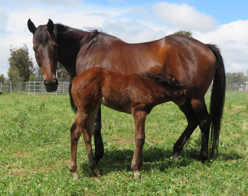 Get The Hint filly at foot of broodmare Get The Hint.