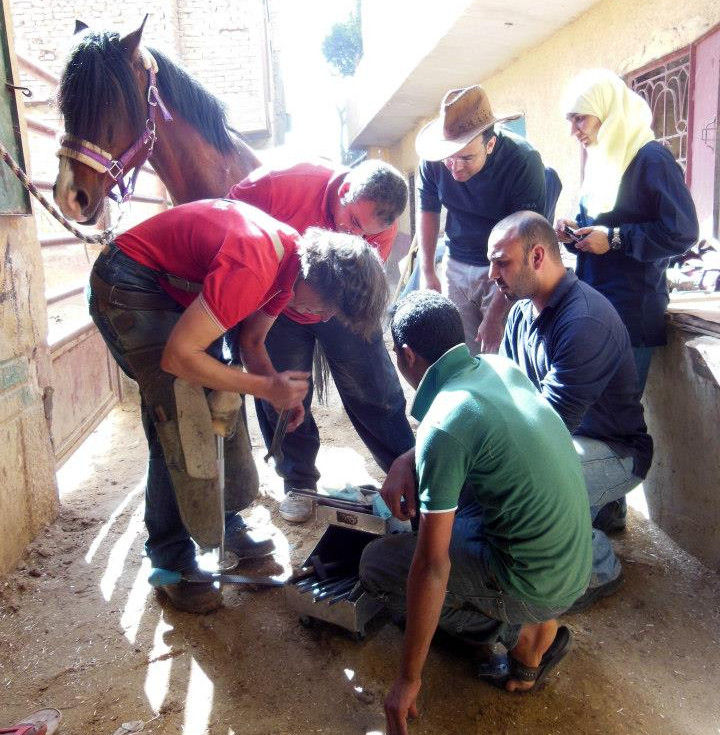 Dr Judith Mulholland shoeing a horse