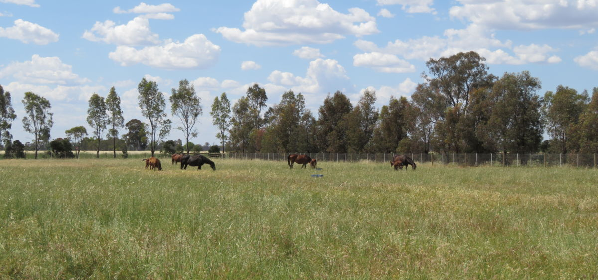 four horses in a paddock, wide shot